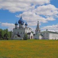 Одуванчиковый луг :: Евгений Седов
