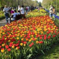 Королевский парк цветов Кёкенхоф (Keukenhof) :: Константин Подольский