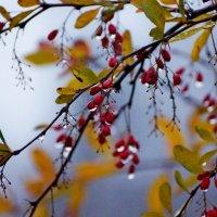 У нас еще осень... :: Wirkki Millson