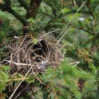 гнездо :: Кристина Волгапова