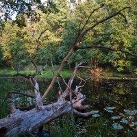 Лесное озеро :: Игорь Ковалев