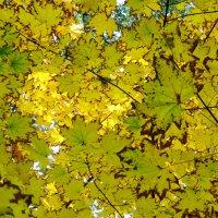 осень :: Alex Frost
