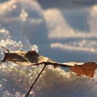 Он должен быть под снегом) :: Руслан Ярошенко