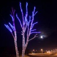 а в  Ярославле растут такие вот деревья ) :: Сергей Голошейкин