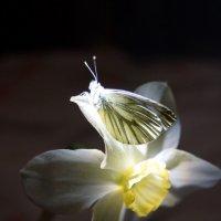 бабочки свет... :: Ирина Бокова