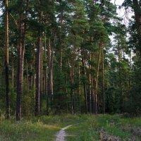 строевой лес :: Яков Реймер