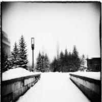 Зима в черно-белом :: Анастасия Иванова
