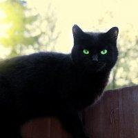 Чёрная пантера... :: Света Кондрашова