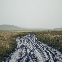 в дороге :: Наталья Grass