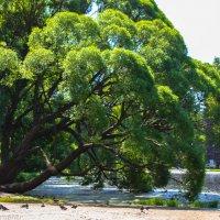 Наклоненное дерево :: Валерия Photo