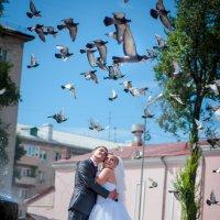 И птицы с нами... :: Александра Педа