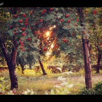 Солнечные лучи! :: Кристина Худякова