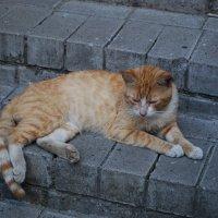 Отдых бездомного кота :: Татьяна Полева