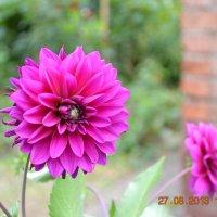 цветок :: Ольга Пятилетова