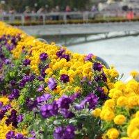 Цветы :: Sunny Anny