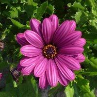 цветок :: Надя Попова