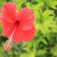 Цветок :: Kristina Markina