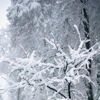 после снегопада :: Светлана Лагутина