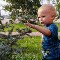 Колючая елка :: Денис Атрушкевич