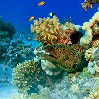 Хозяйка рифа :: Roman_