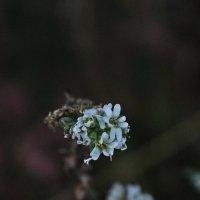 Цветок :: Алёна Бакерина