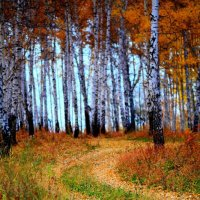 тропинка в осень :: Евгений Брагин
