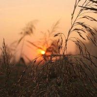 Солнце встает... :: Александр Герасенков