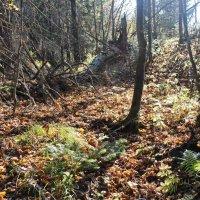 лес :: Юлия Широкова