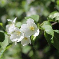 нежная весна :: Полина Королева