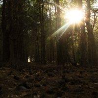 Лес :: Ксения Одинцова
