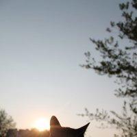 бездомная кошка, преданная :: Екатерина Калита