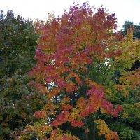 Разноцветная осень :: esadesign Егерев