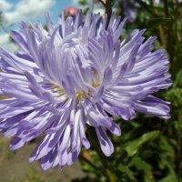 цветок :: Юлия Савченко