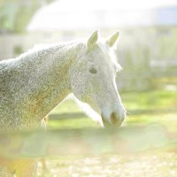 Лошадь :: abdurRahim Israfilov