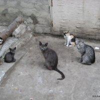 Кошки :: Mikhail Devlyashov