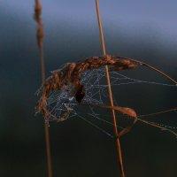улитка в паутине.... :: Вадим Виловатый