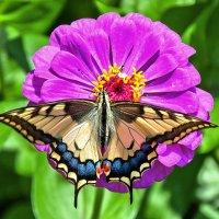 Бабочка красавица :: Надежда Лаптева
