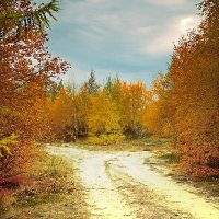 Жёлтой краской кто-то выкрасил леса. :: Vasiliy Sorokhan