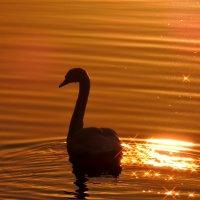 ...в лучах заходящего солнца... :: Люба Вылывана