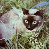 Кошка :: Nagissa Kaori