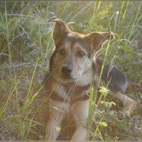 В лесу на закате дня :: galina tihonova