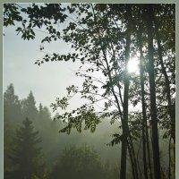 Утренний туман :: Александр Силинский