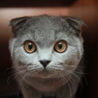 не котенок, а совенок! :: bagira 2