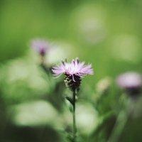 цветок :: Руслан Косенко