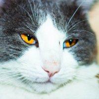 Глаза кота :: Марина Кириллова
