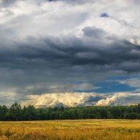Небо, поле, лес. :: Andrei Dolzhenko