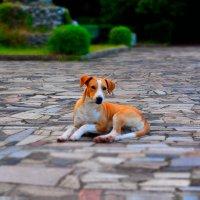 Рыжий пёс :: Александр Петряев