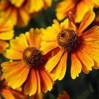 цветочки :: Ксения Павлова