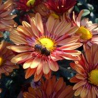 мой сад :: Алена Андреева