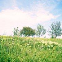 Деревья :: Юлия Быкова